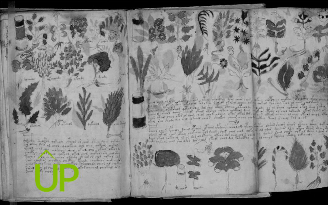El manuscrit Voynich